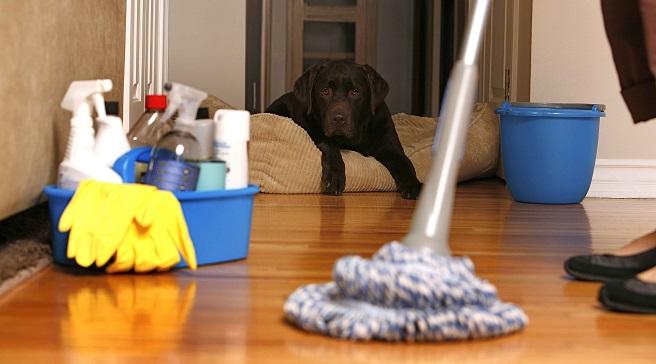 Consejos-para-decorar-con-mascotas-en-casa1