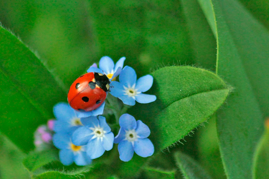 10863a-remedios-naturales-insectos-jardin