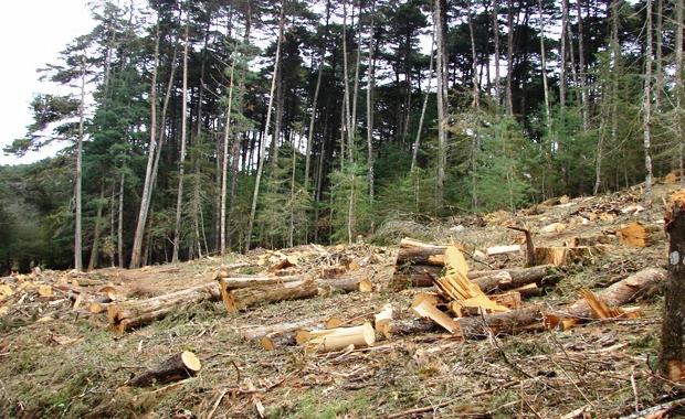 Tala Indiscriminada de árboles