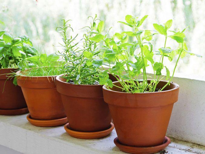 10 plantas que no pueden faltar en tu cocina